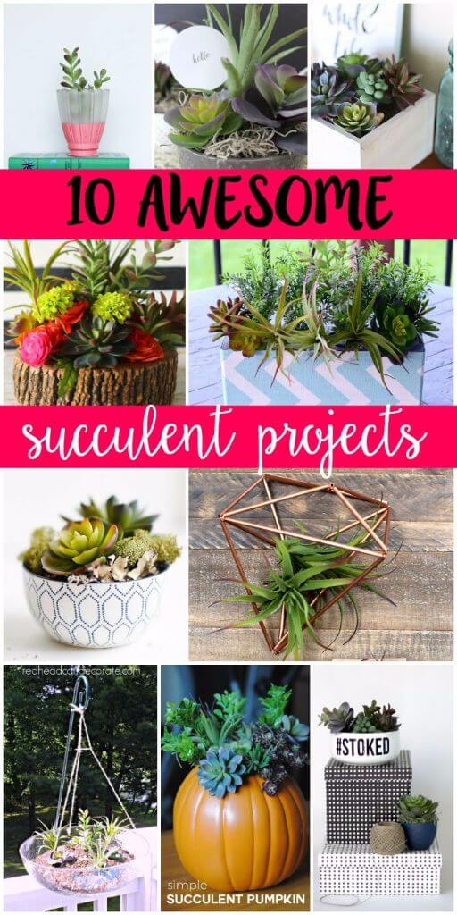 10+ awesome succulent projects from some of the most creative bloggers