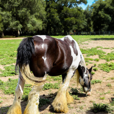 4 Reasons Horse Lovers Will Love Ocala FL