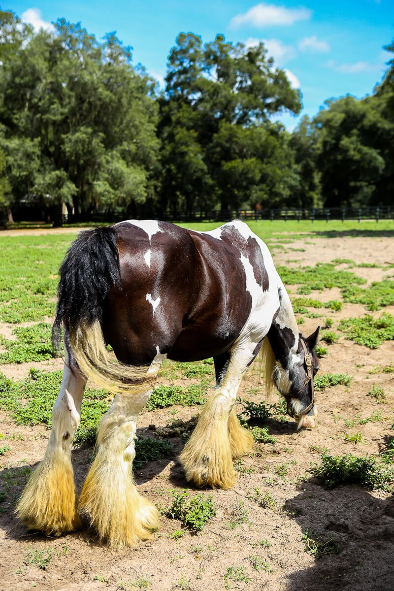 Ocala-Horses-10