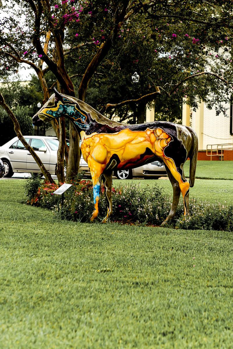 Ocala-Horses-4