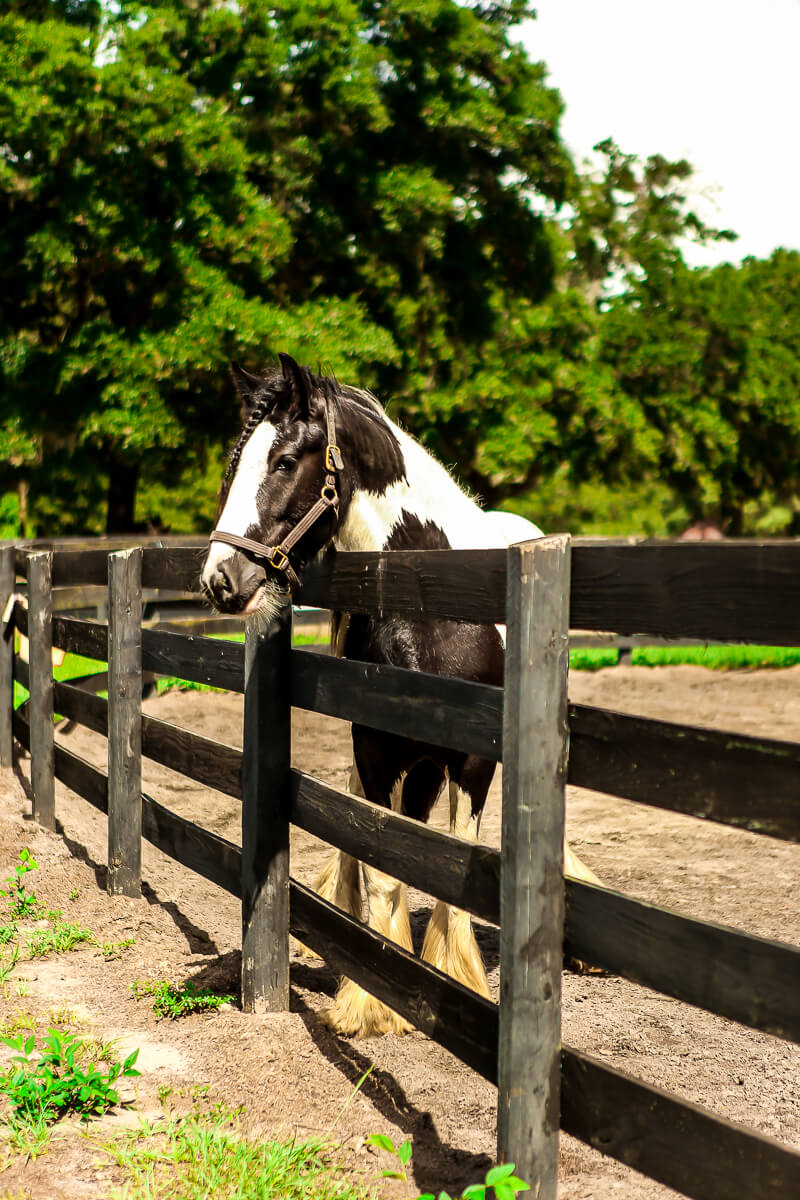 Ocala-Horses-6