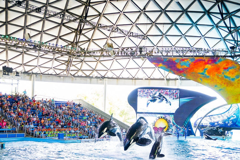The orca show is one of the best SeaWorld shows