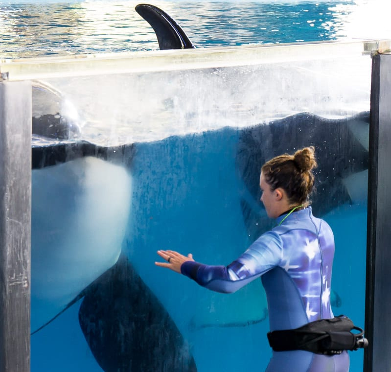 Don't miss the SeaWorld Shamu Show at SeaWorld Texas