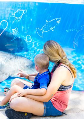 Check the SeaWorld San Antonio hours before visiting