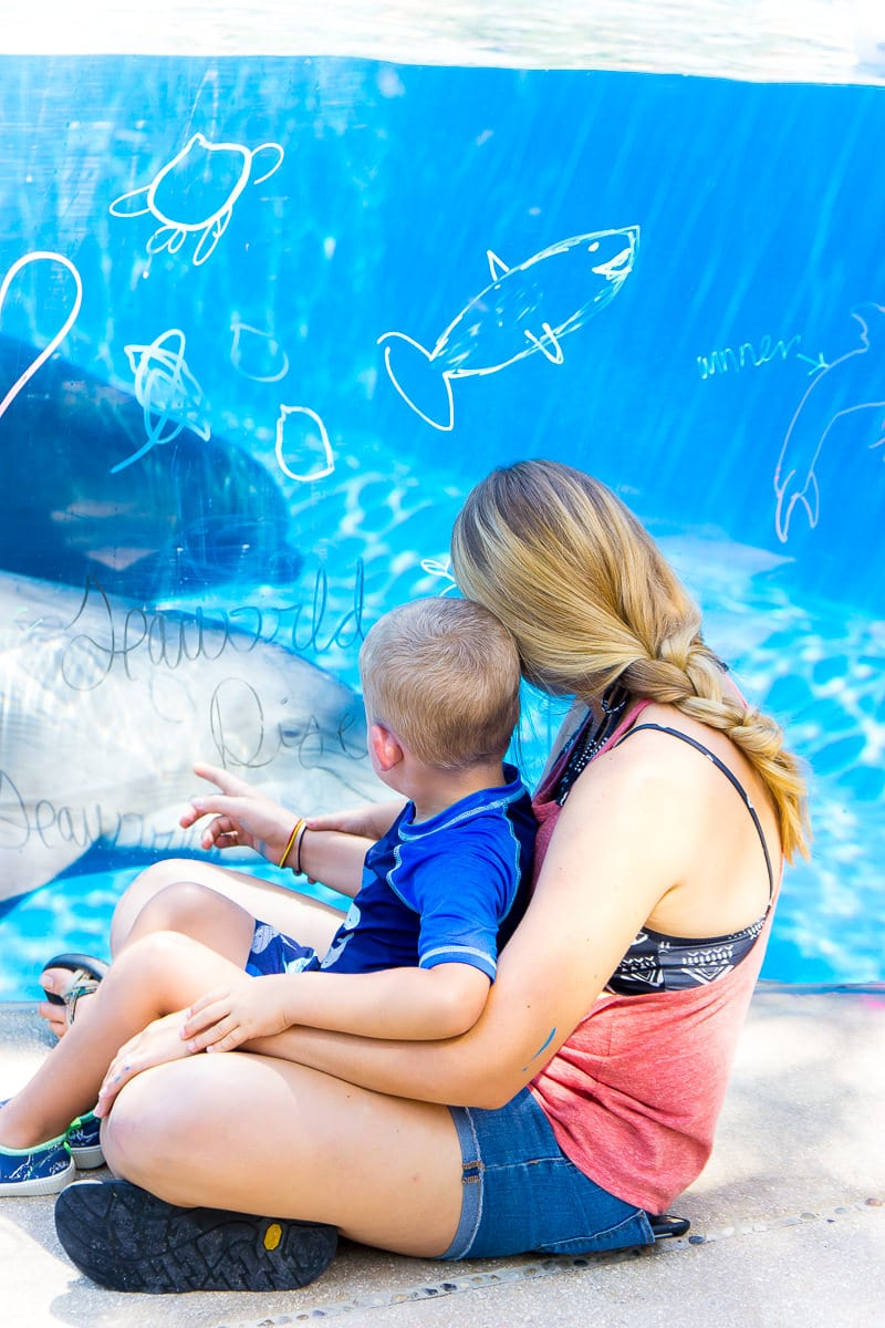 photograph relating to Seaworld San Antonio Coupons Printable called 9 Insider Tricks for Browsing SeaWorld San Antonio TX