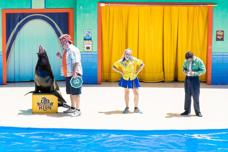 Sea Lion High is a fun SeaWorld San Antonio Texas show