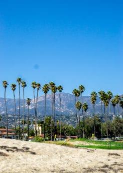 Palm trees on the pier near Hotel Indigo Santa Barbara