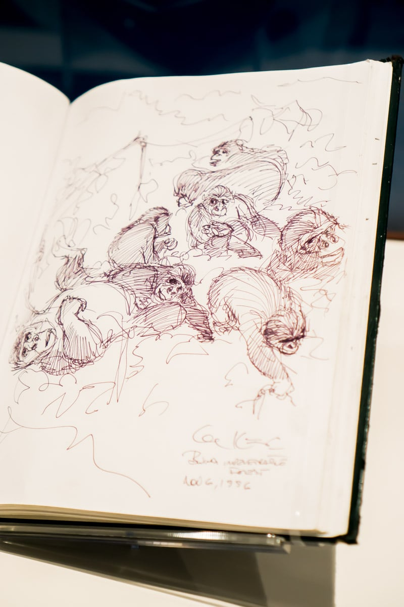 Original Tarzan sketch in the Disney family musuem