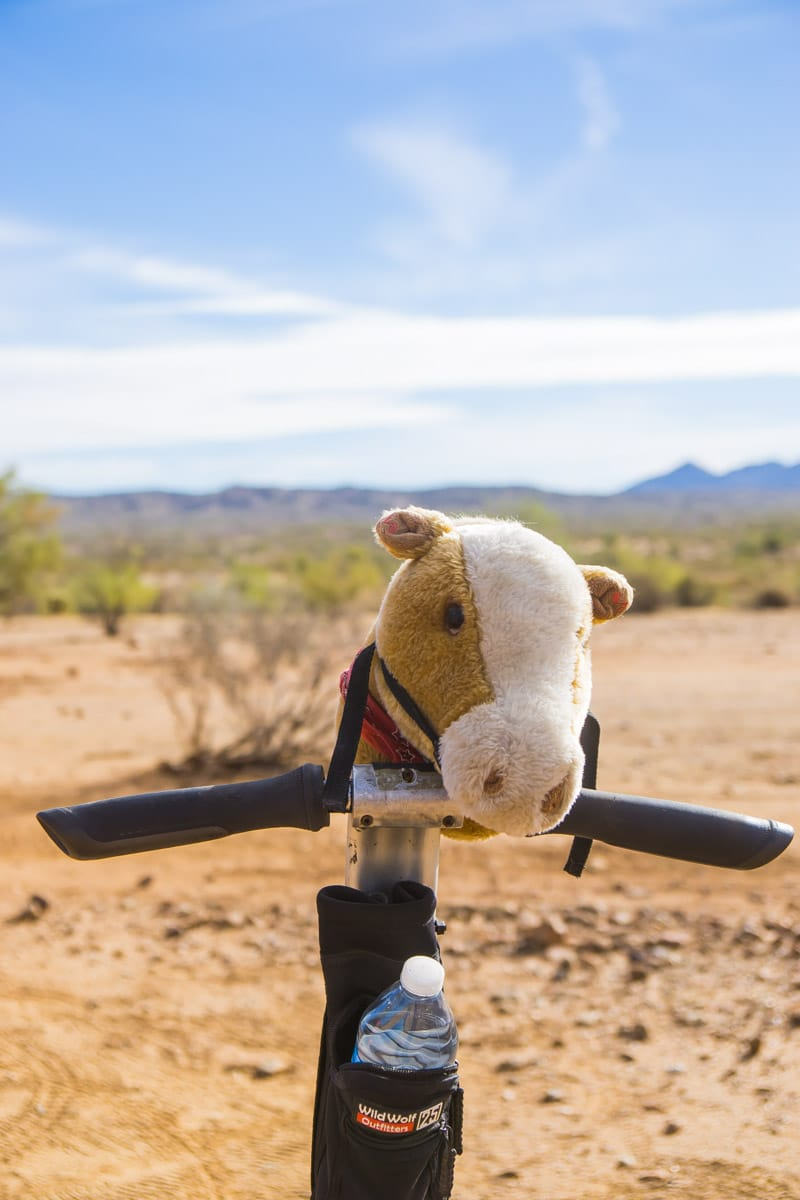 A desert segway tour is one of the most fun things to do in Phoenix AZ