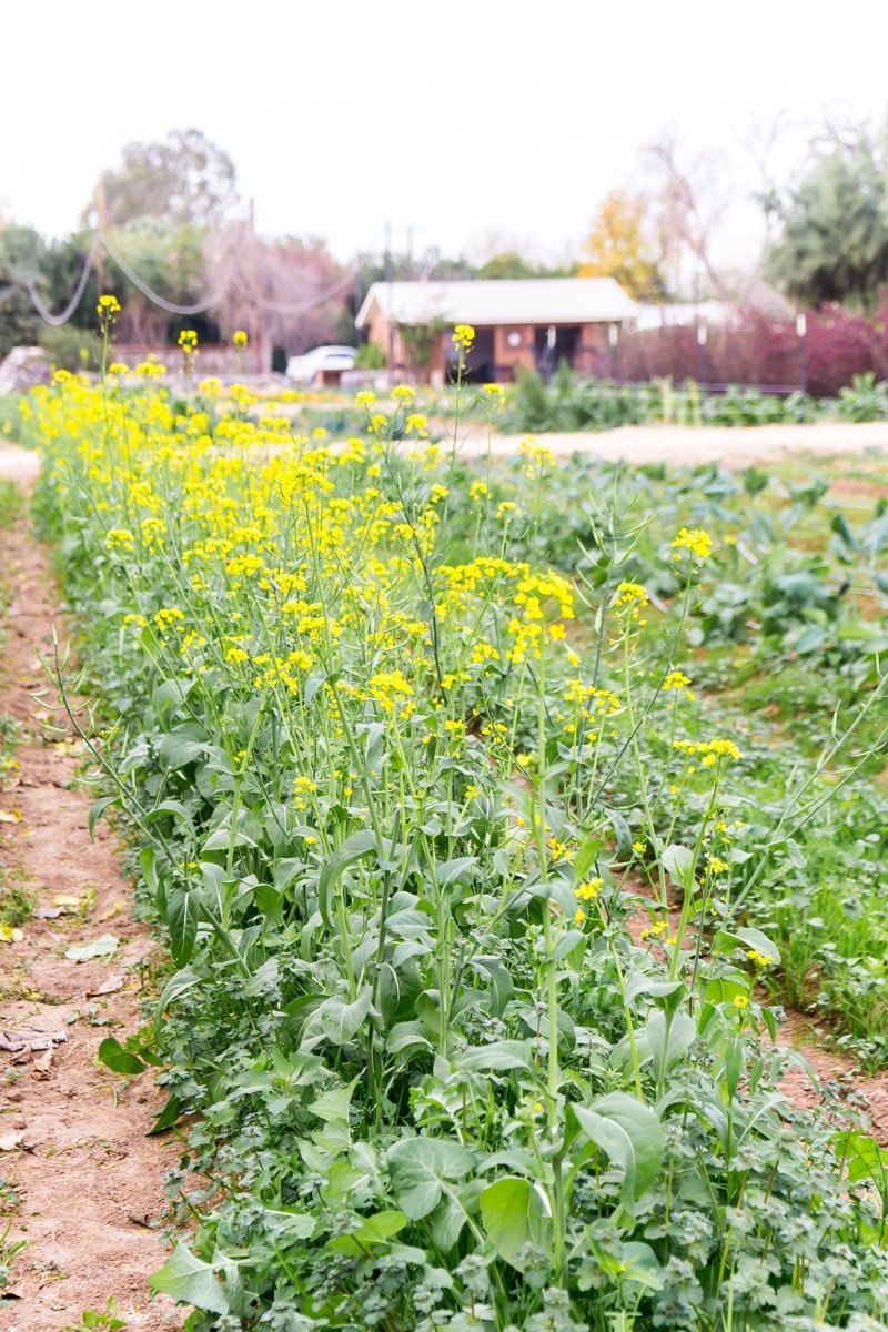 Flowers growing at The Farm at South Mountain