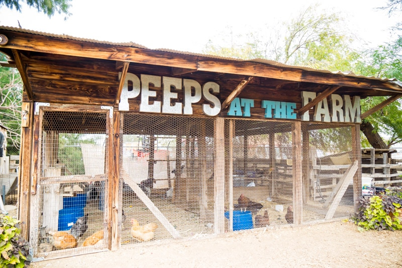 Enjoying the peeps at The Farm at South Mountain is one of the most fun things to do in Phoenix AZ