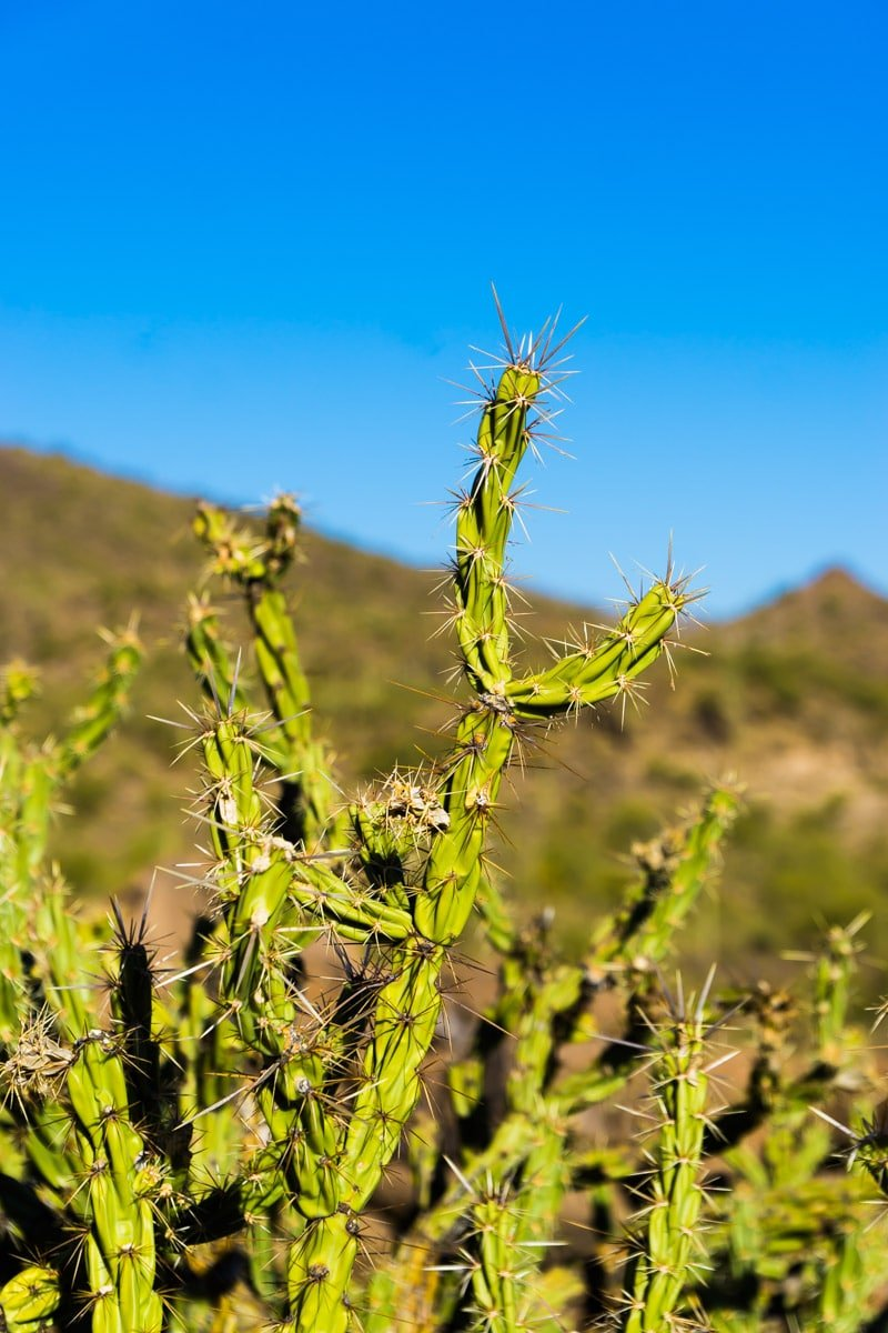 A picture of cactus seen while doing fun things to do in Phoenix Arizona