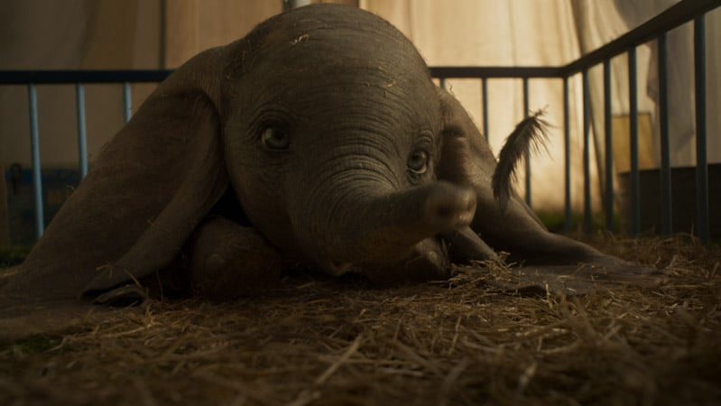 Dumbo and his magical feather photo in this list of Disney movies coming out in 2019