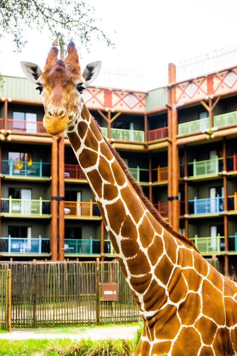 Animal Kingdom Lodge safari is one of the best things to do at Disney World