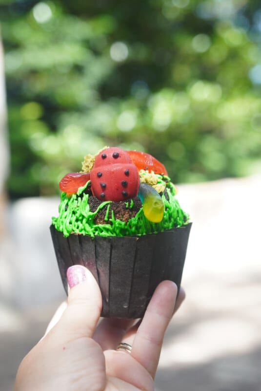 Chocolate cupcake with gummy bugs on top