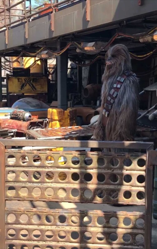Chewbacca at A Galaxy's Edge