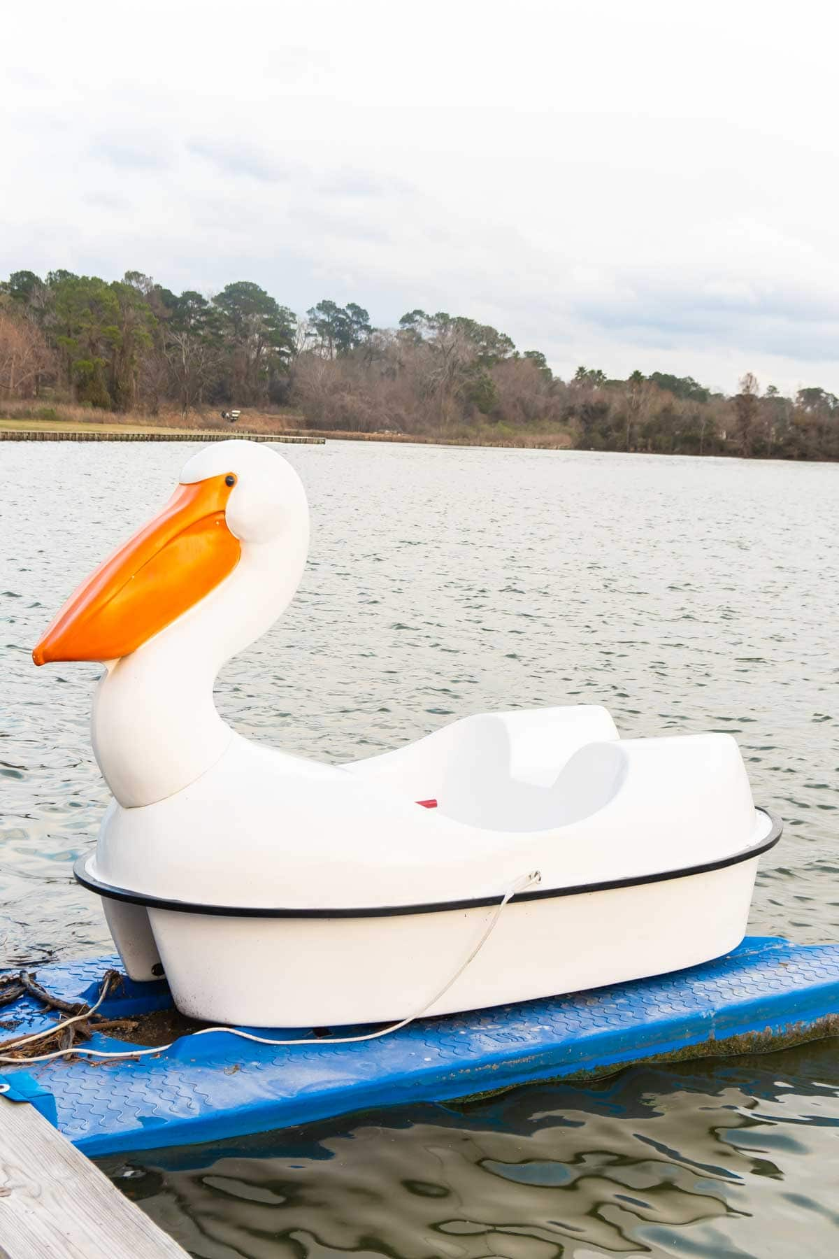 swan pedal boat on lake conroe