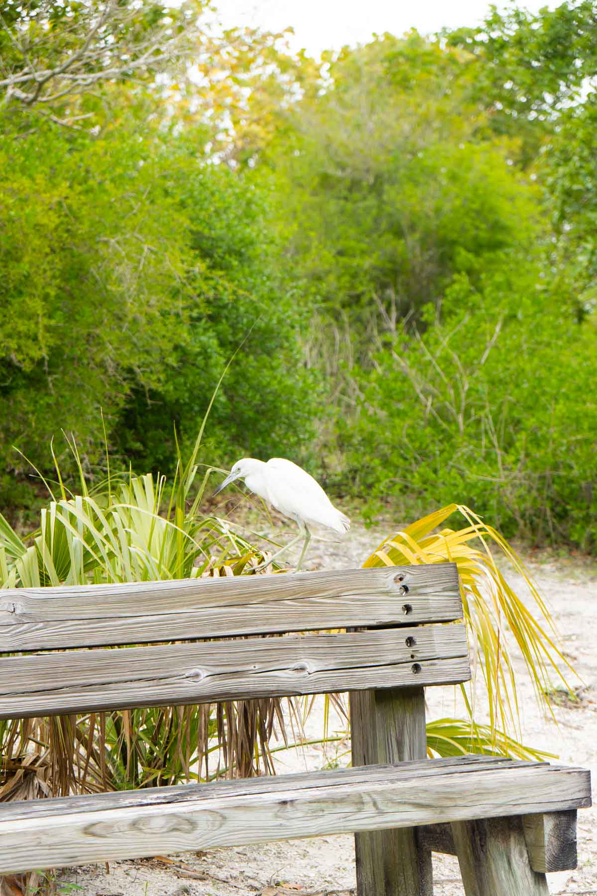 White bird sitting on a wooden bench
